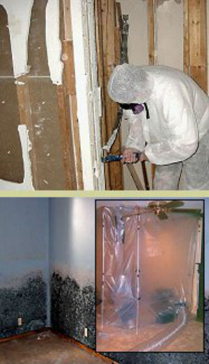 MSP Commercial Mold Remediation