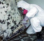 GreenSTAR Pro Residential Mold Inspection
